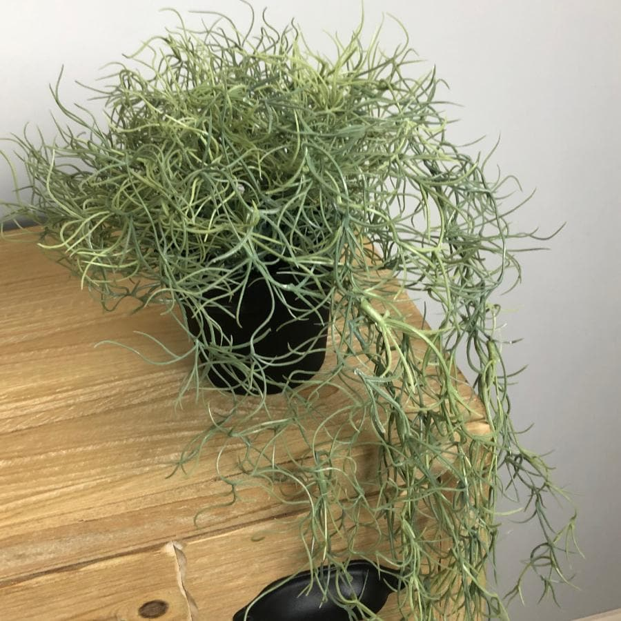 Artificial Potted Trailing Spanish Moss Plant at the Farthing