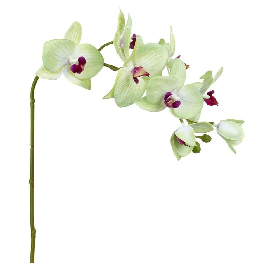 Artificial Cream Orchid Stem - Real Feel