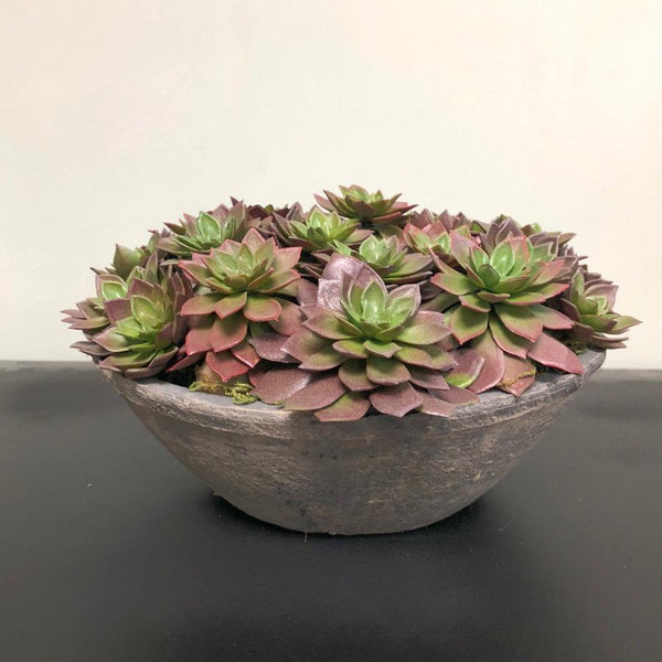 Assorted Echeveria Succulent Plants in Grey Bowl | Farthing