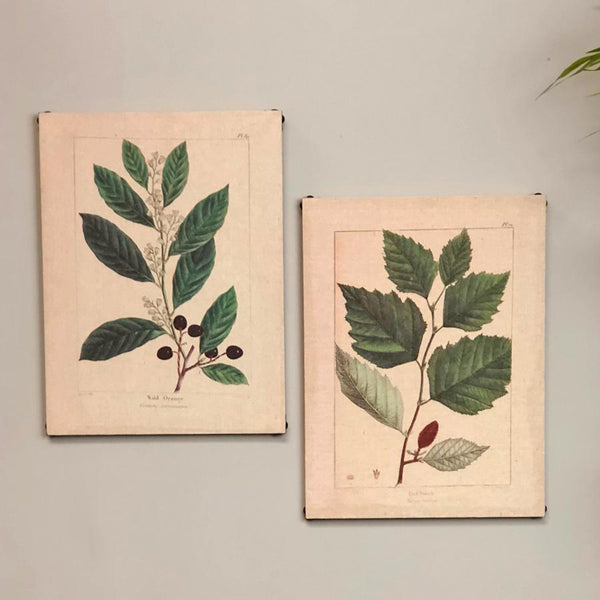 Botanicals Wall Canvas - set of two | Farthing 2