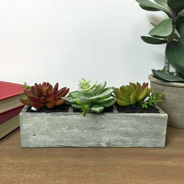 Cacti Succulents Set in Rustic Tray - The Farthing