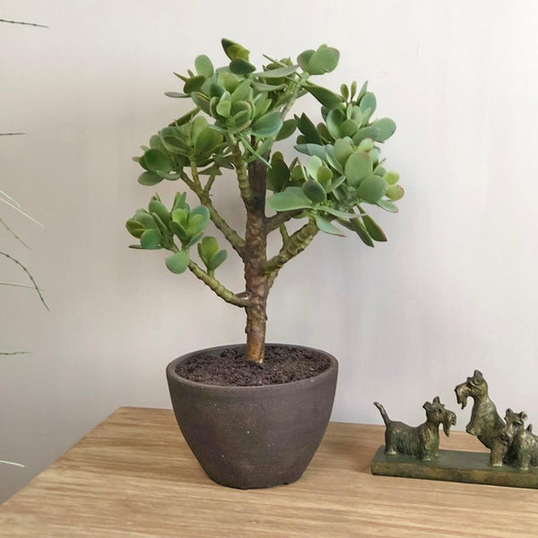 Faux Money Tree In Rustic Pot | Farthing 2