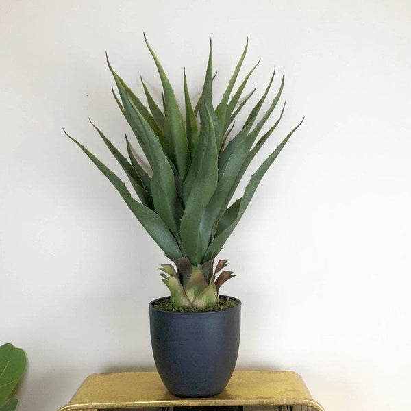 Faux Maguey Succulent at the Farthing