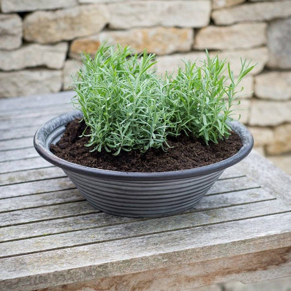 Galvanised Charlbury Table Top Planter - Small - The Farthing