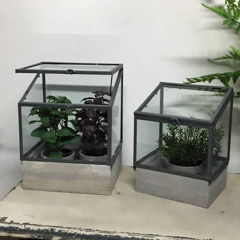 Indoor Plant House Set at the Farthing