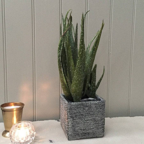 Potted Faux Speckled Green Aloe Vera - the farthing