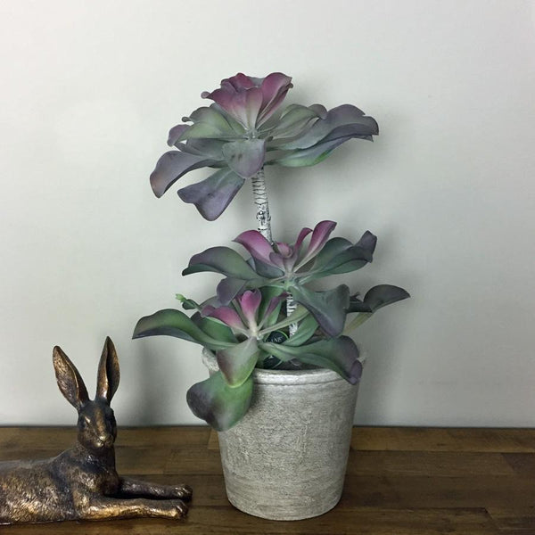 Potted Pink & Green Echeveria Succulent | Farthing