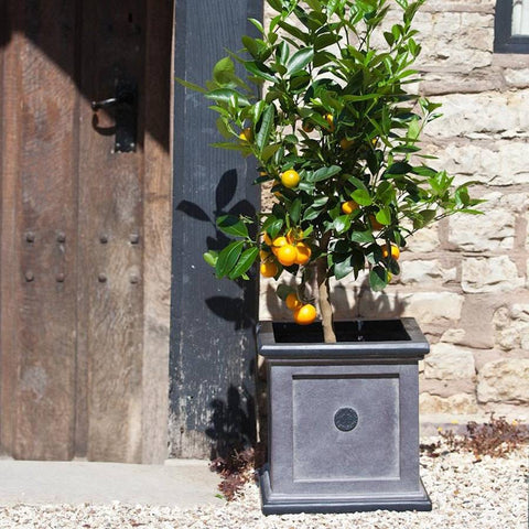 Square Royal Elite Planter in Grey - 30cm - The Farthing