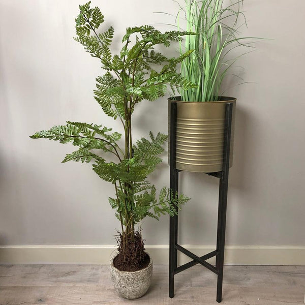 Tall Potted Genus Fern at the farthing  2