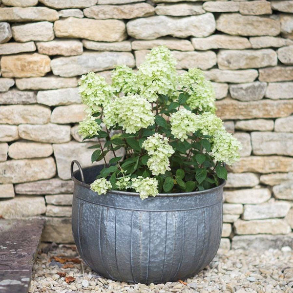 Vintage Style Galvanised Shilton Wash Tub Planter - Large - The Farthing