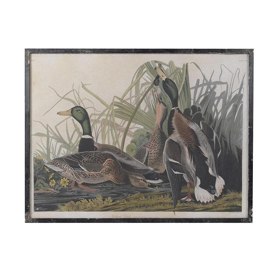 Distressed Vintage Duck Print at the Farthing 1