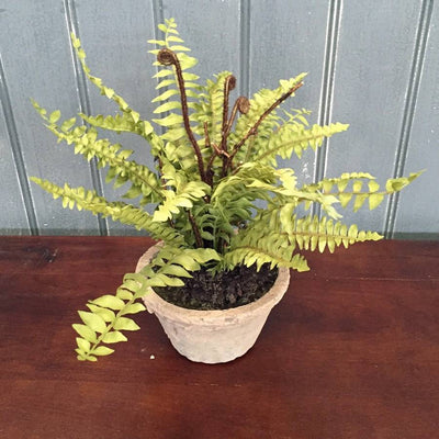 Potted Faux Boston Fern in a Rustic Cement Pot - The Farthing  - 1