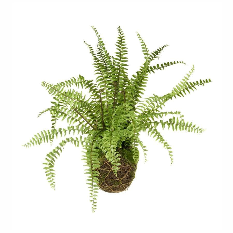 Large Faux Boston Fern at the Farthing