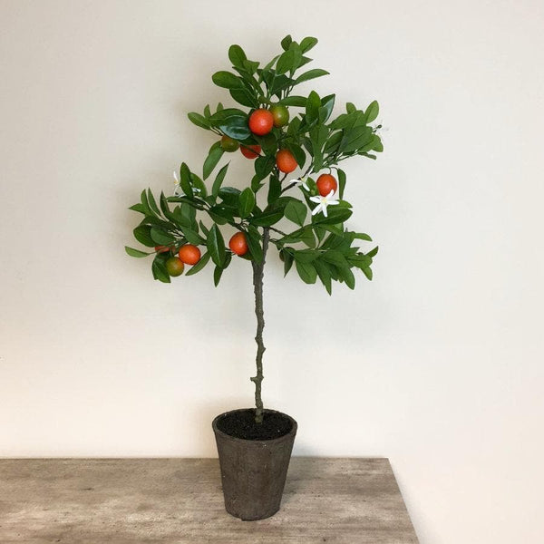 Orange Tree with Blossom in Grey Cement Pot at the Farthing 1