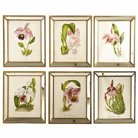 689720b5148 Six Botanical Orchid Prints in Antique Style Mirror Frames