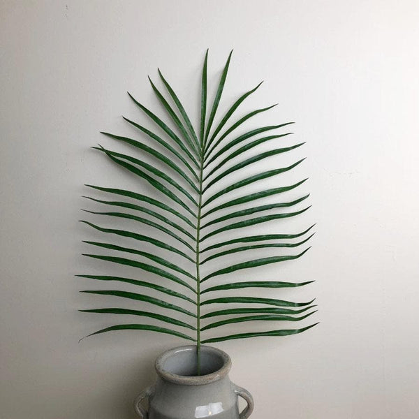 Green Areca Stem Palm Leaf at the Farthing 2