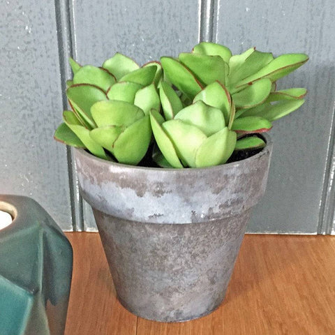 Potted Faux Succulent in Rustic Style Pot - The Farthing
