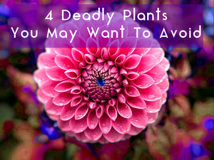 4 Deadly Plants You May Want To Avoid