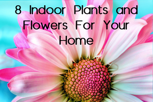 8 Indoor Plants and Flowers For Your Home