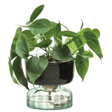 LSA International Canopy Self Watering Planter H13cm Clear/Part Optic