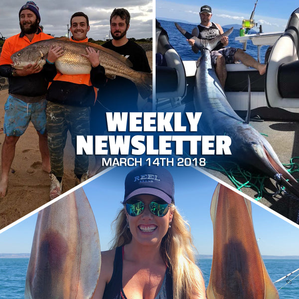 Weekly Newsletter 2018-3-14 - Cristy's Westernport Report, Bermagui Marlin, Prawning and more Stump Jumpers