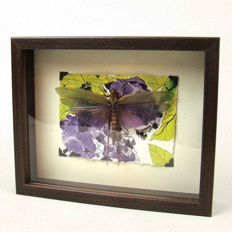 Purple Hopper Grasshopper Frame