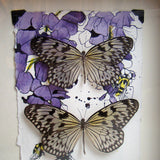 Two Paper Kite Butterfly Frame