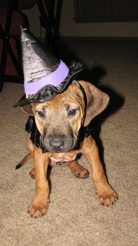 Riley in her Halloween witch costume.