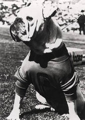 An early photo of the University of Georgia's dog mascot Uga I dating back to 1956.