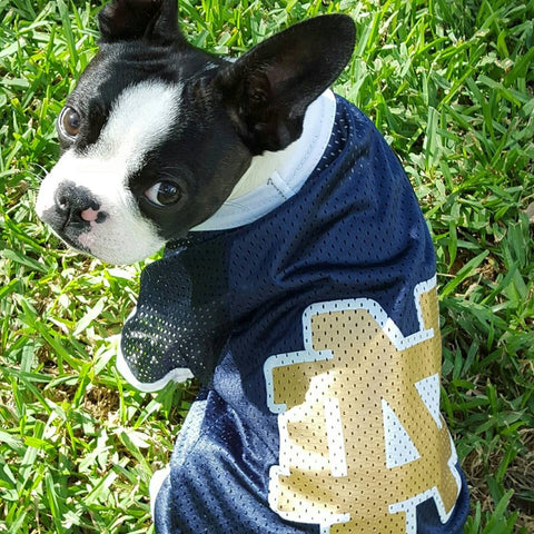 Notre Dame Dog Jersey