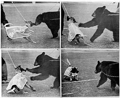 1957 Sugar Bowl Live Mascot Incident Smokey versus Bear
