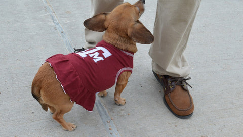 Texas A&M Aggies Dog Dress on Puppy