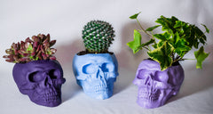 Purple-Skull-Art-Design