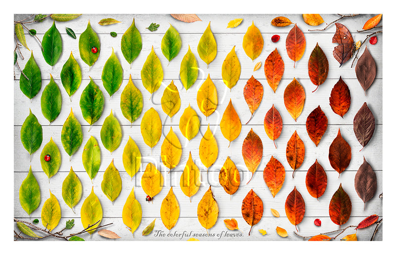 The Colorful Season of Leaves 1000 pieces Jigsaw Puzzle Pintoo