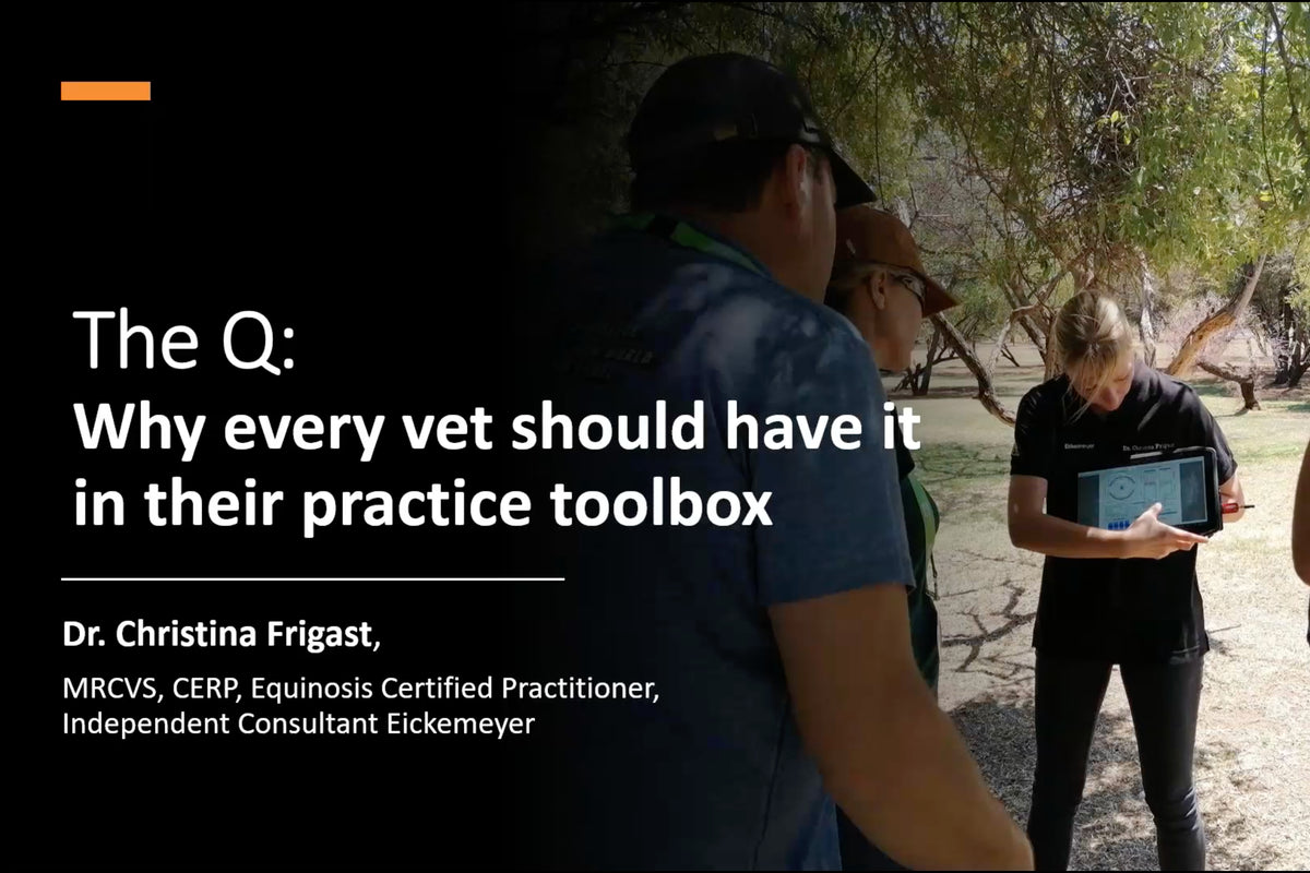 The Q: Why Every Vet Should Have it in their Practice Toolbox