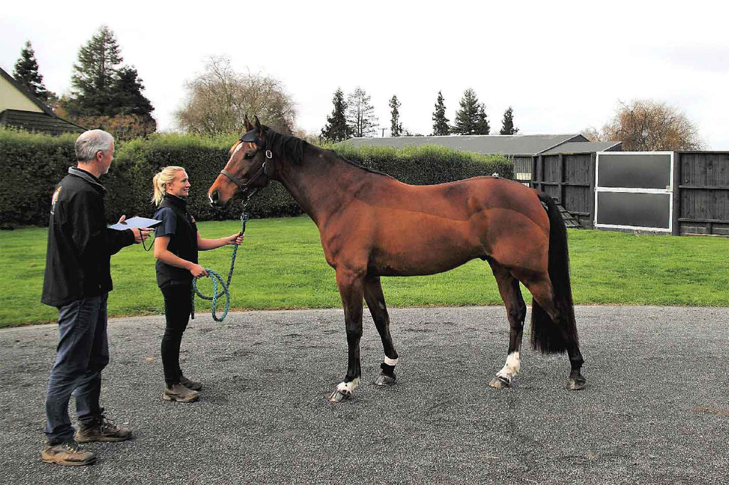 Rehabilitation of the Equine Athlete: Evaluating Objective Data