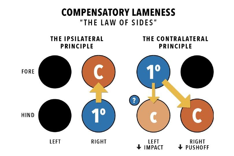 FAQ: Why does the Trial AIDE that evaluates for compensatory lameness patterns suggest a primary lameness in some trials but not others when the patterns of asymmetry are the same?