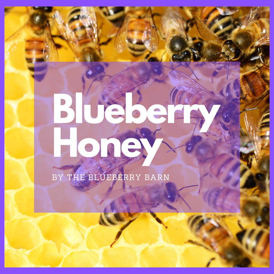powerful reasons why blueberry honey is good for you