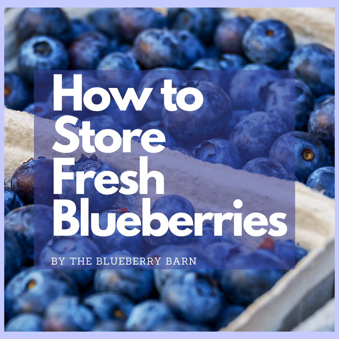 how to store fresh blueberries by the blueberry barn