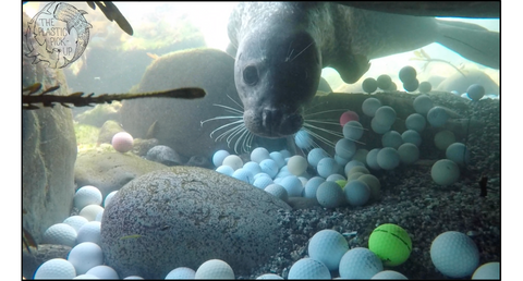 Sea Lion with Golf Balls off of Pebble Beach