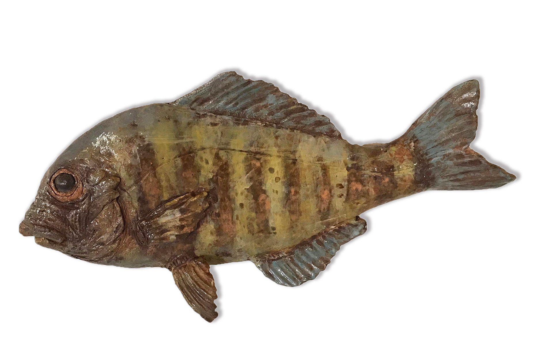 Andrew Ward - Barred Surfperch #2