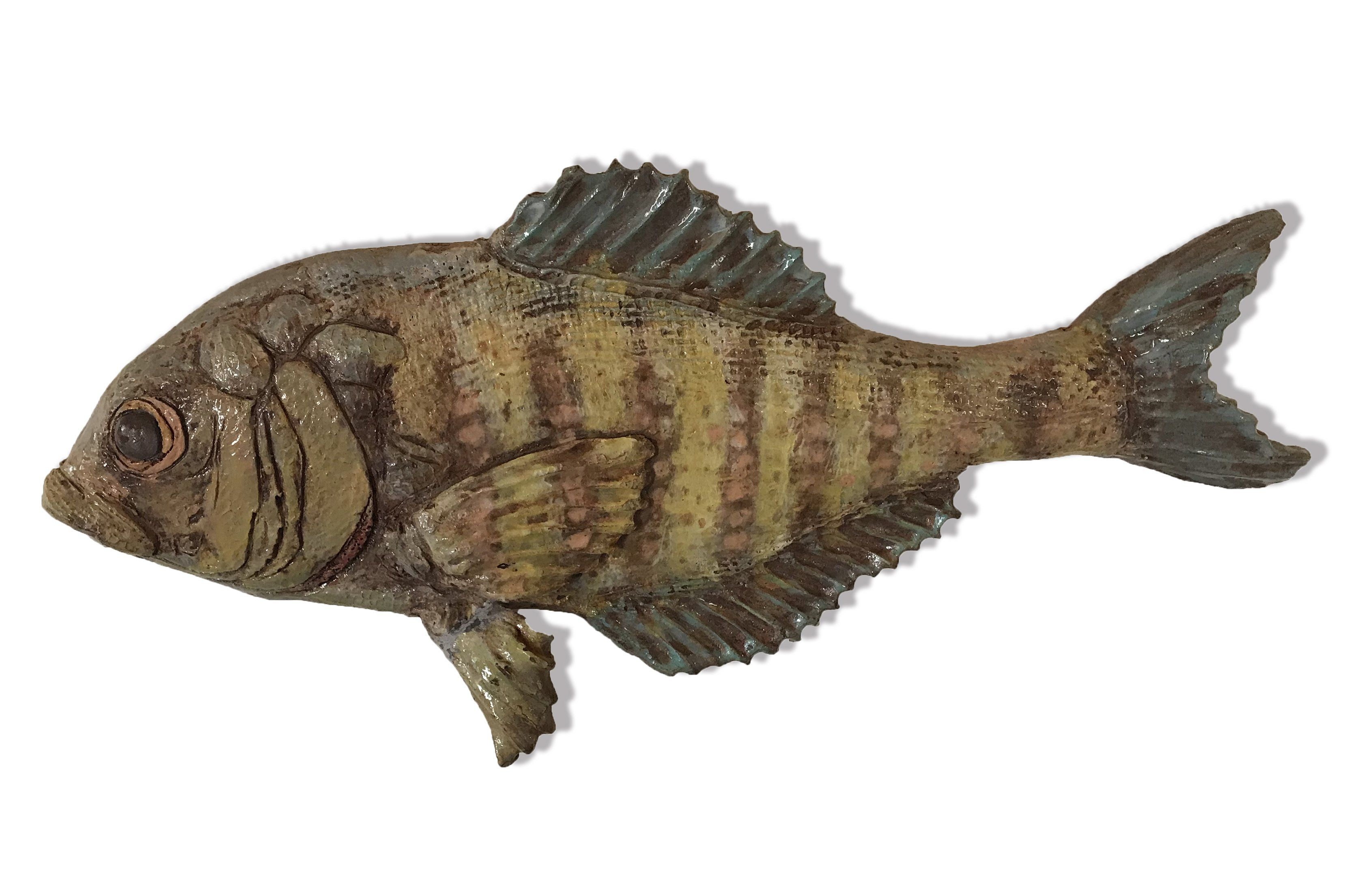 Andrew Ward - Barred Surfperch #5