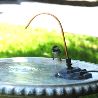 Why Birds Are Not Using Your New Bird Bath