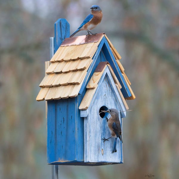 Unique Bluebird Houses