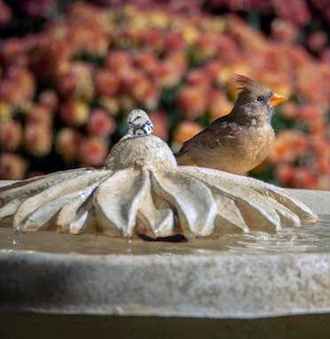 Cool Bird Bath Accessories