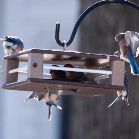 Gilbertson Bluebird Feeder
