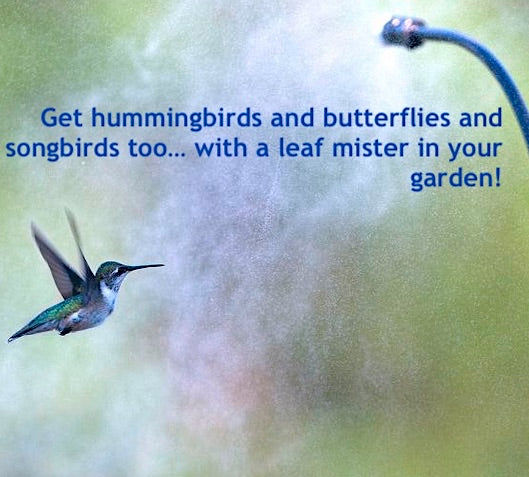 Add a Leaf Mister for Hummingbirds