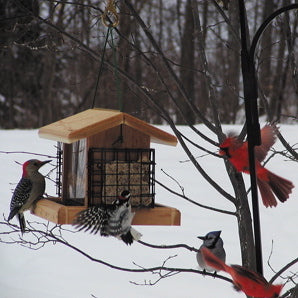 Year-Round Care for WildBirds