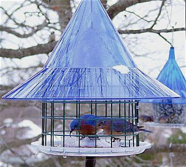 Bluebird Feeders, Caged and Fly-In Styles