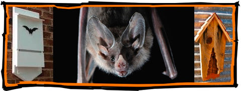 Offer Bats Proper Shelters and they'll return the favor
